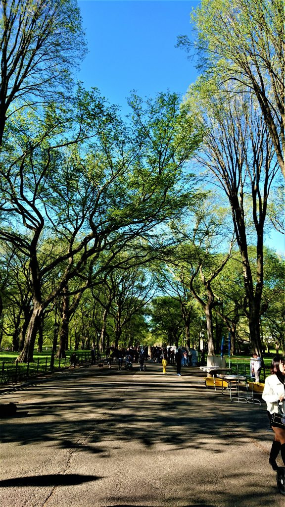 Free things to do in New York - Central Park